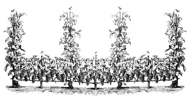 Château Pleyssac-Tayac